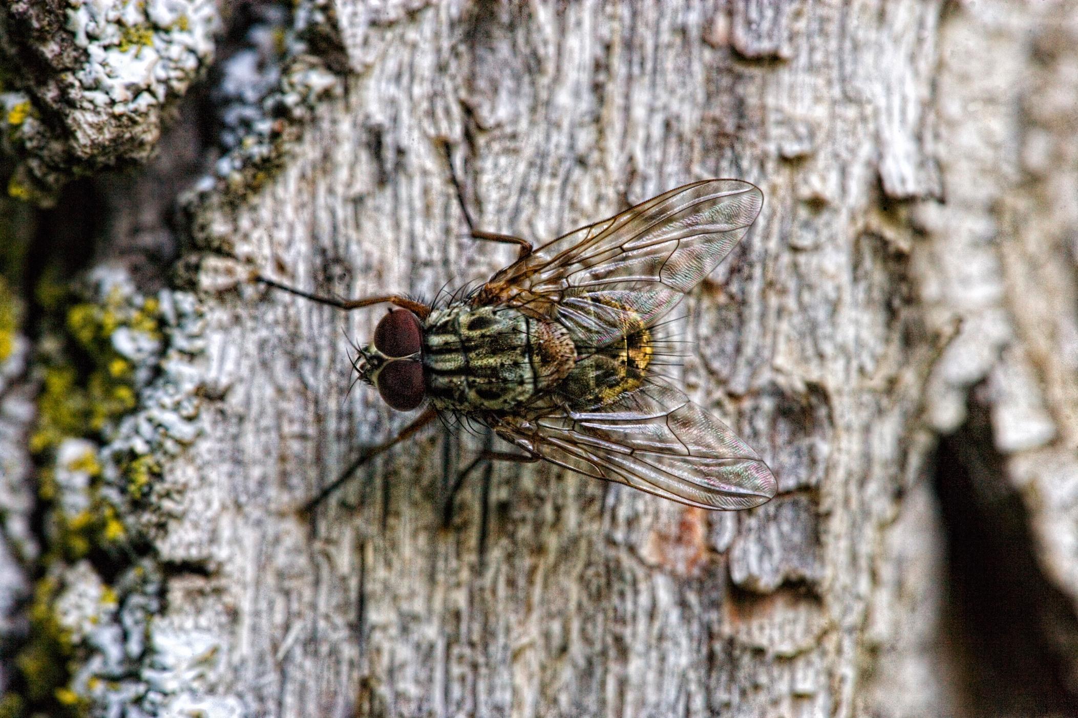 mosca-tonal-contras-ful-062313_223-copia
